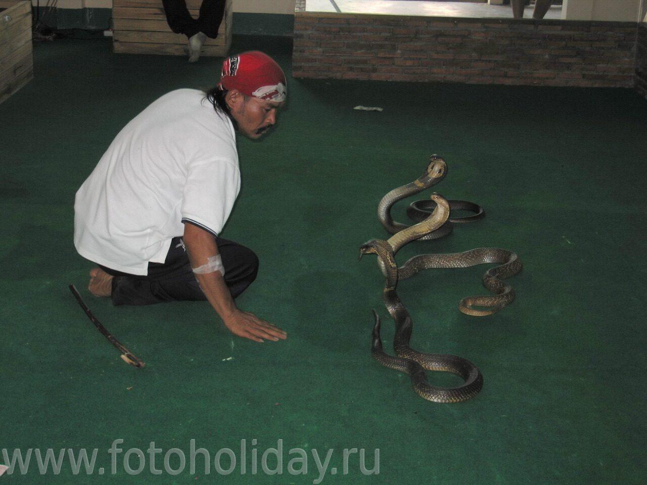 Заклинатель змей пластырь на руке